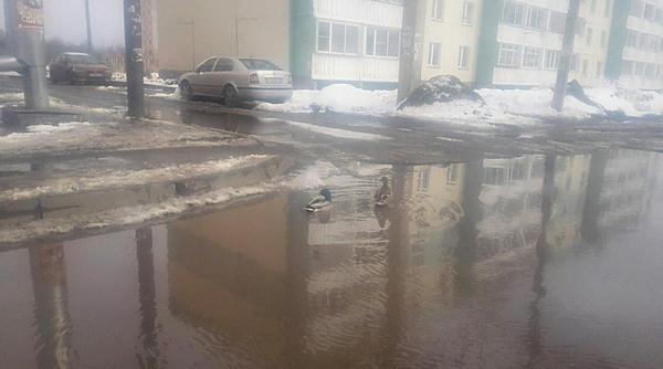 Некоторые улицы Кирова превратилась в озёра и на них уже плавают утки Киров, Утка, Лужа, Дорога
