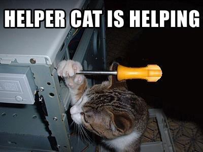 Забыл выйти из аккаунта Пикабушники, Забывчивость, Кот, Помощь