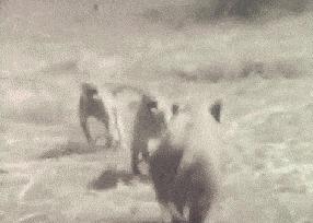 """Отрывки из фильма """"Планета обезьян: Война"""" гифка, планета обезьян, эволюция, война, курение, обезьяна, человек, длиннопост"""