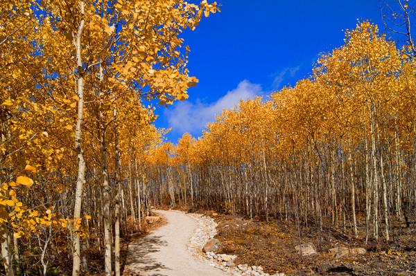 Природа Квебека, Канада. Октябрь 2015