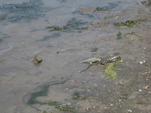 Сентябрь 2010 года. Русло Старой Волги, напротив Маячного, ниже по течению. Старая Волга, Уж, Рыбалка, Астраханская Область