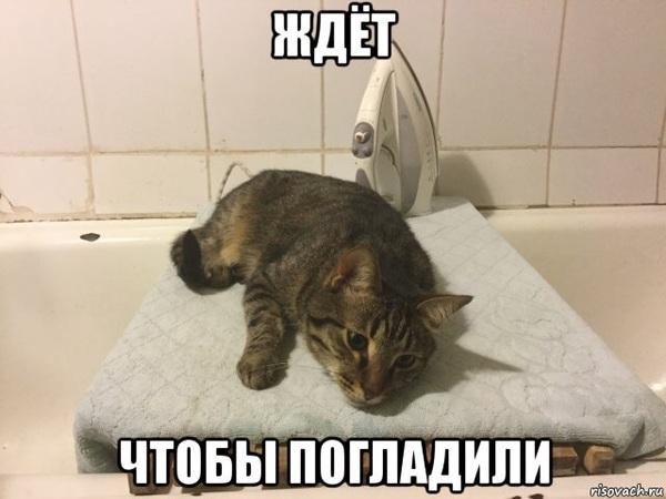 Ждёт... Кот, Утюг