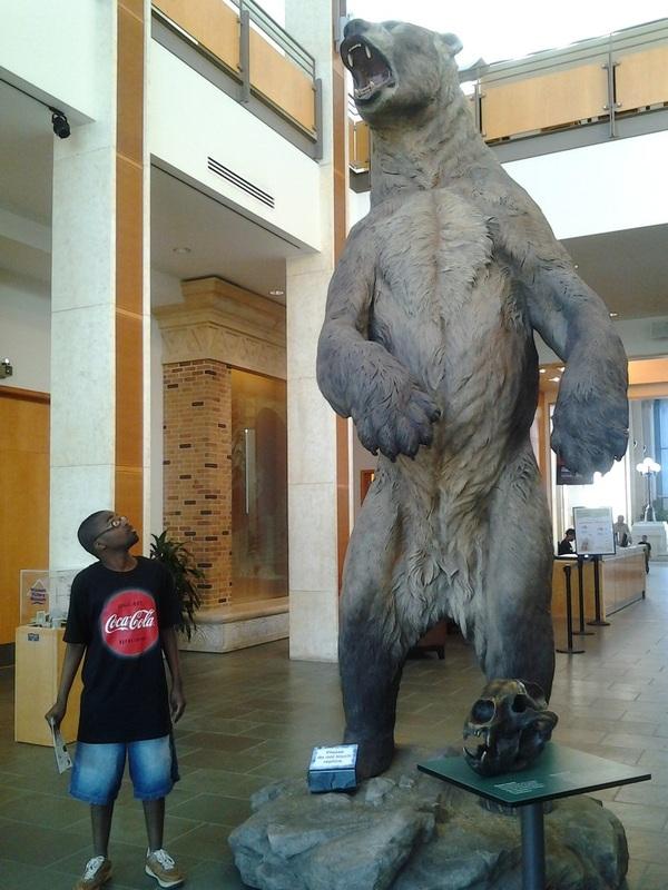 Короткомордый медведь. Медведь, Фотография, Вымерший вид, Хищник, Длиннопост