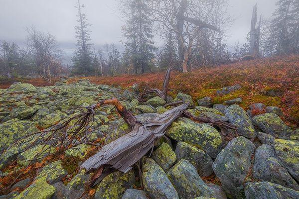 Северный Урал Урал, пейзаж, фотография, Природа, мох, лесной пейзаж, длиннопост