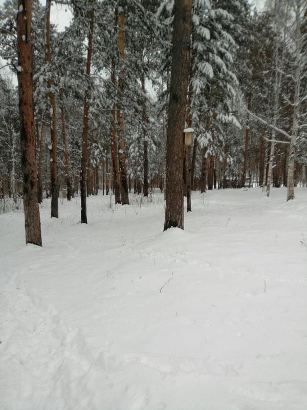 Погода пошутила. Иркутск. Хорошая погода, Снег, Весна, Длиннопост