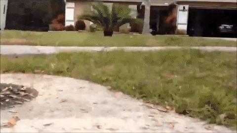 Пеннивайз во Флориде