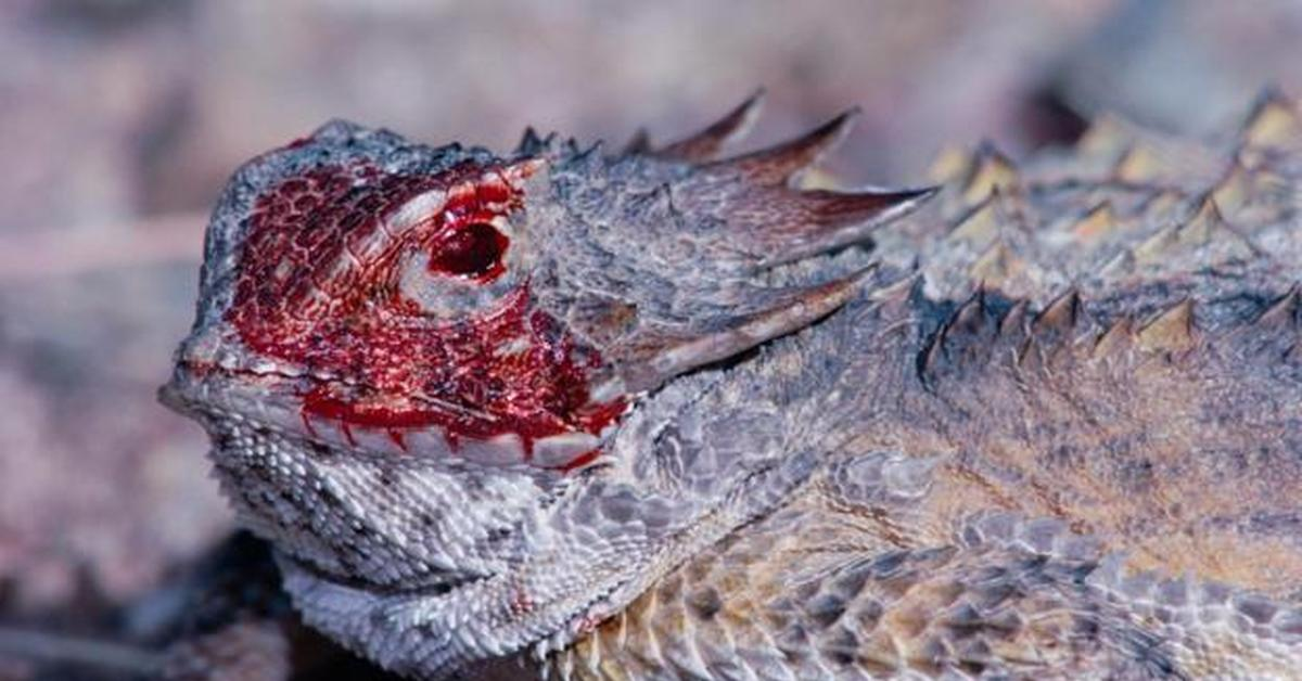 Nude scenes horned lizard squirting blood