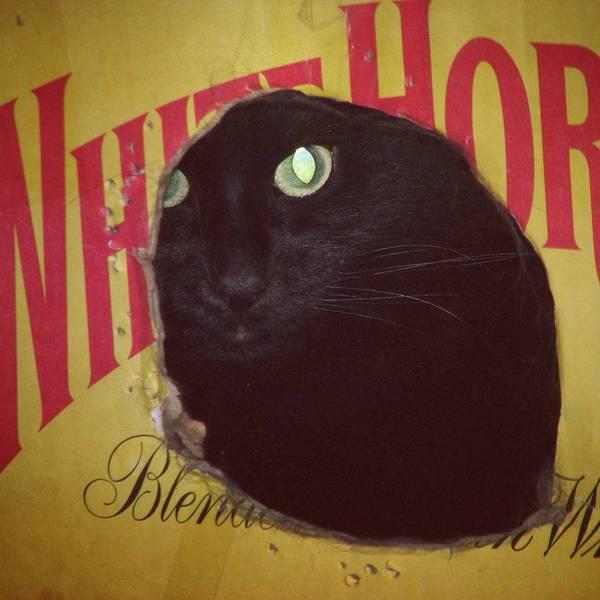 Домик для кота когда хозяин алкаш.