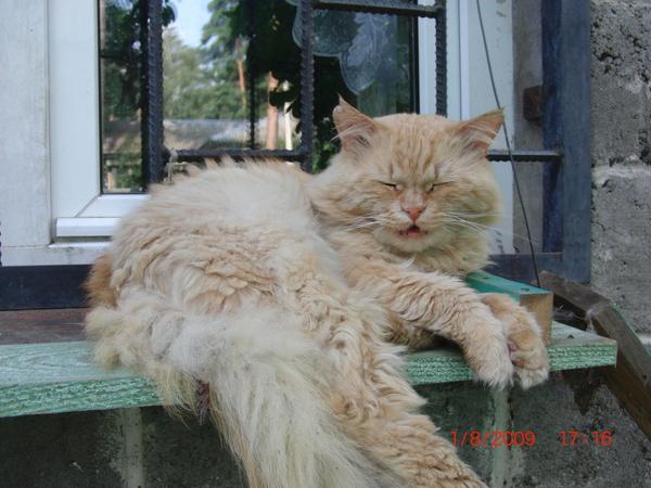 Выжить кот, выжить, история, из жизни, капкан, уроды, длиннопост