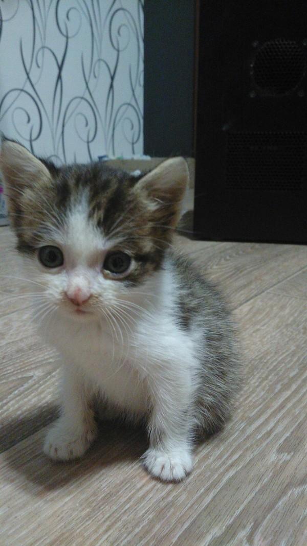 Кроссовок как посредник))) кот, залез на кроссовок, подобрыш, питомец, длиннопост