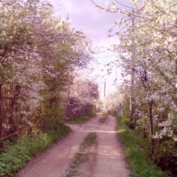 Дорога (коммент для минусов - в комментах) деревня, фотография, весна, зима, лето, осень, длиннопост