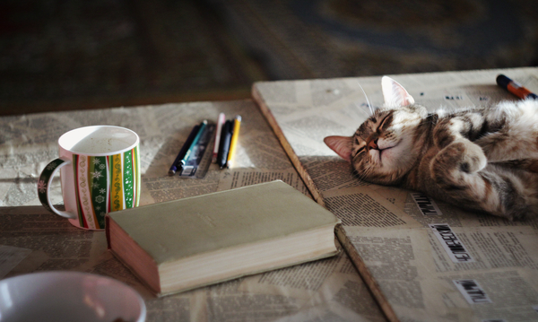 Тепло, лампово, котово Тепло, Уют, кот, утро, солнце, сон, книги, длиннопост