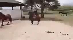 Необычный конёк