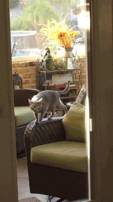 Что-то в комнату заходить не хочется Кот, Стул, Отрицание бытия, Гифка, Дверь, Полезный кот, Реверс, RebornKeksim