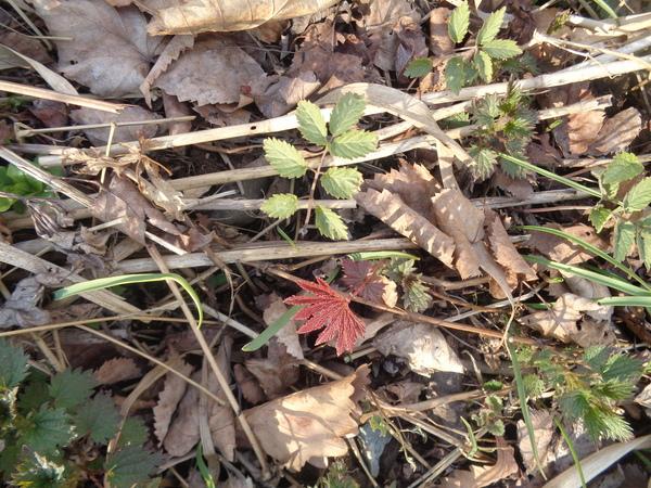 Весна в предместье Артёма весна, фотография, природа, Приморский край, длиннопост