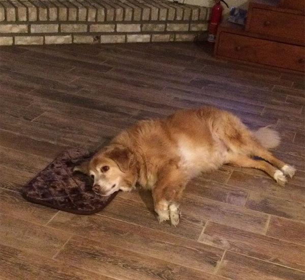 Когда мама купила подарок, который не нравится, но зачем маму расстраивать Собака, Мама, юмор, друг, длиннопост