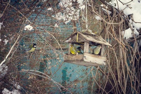 Про птичек пост. птицы, фотография, белка, Природа, кормушка, братья наши меньшие, длиннопост