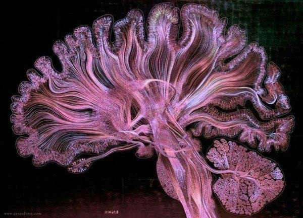 Нейронные сети головного мозга