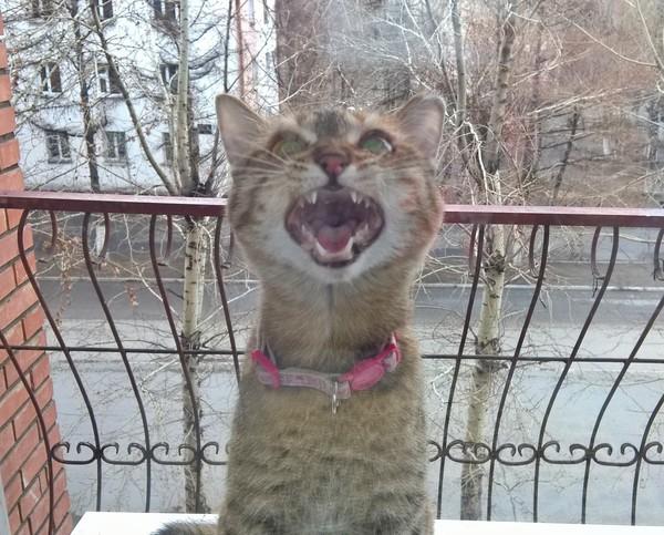Кошка услышала, что начинается ливень и хочет домой) Кошь, Хлеб, Зверокусаки, Кот