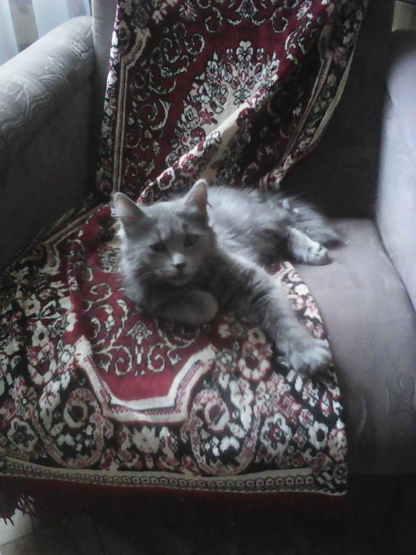 Найден котёнок. г Новосибирск Найден кот, Потеряшка, Кот, Длиннопост