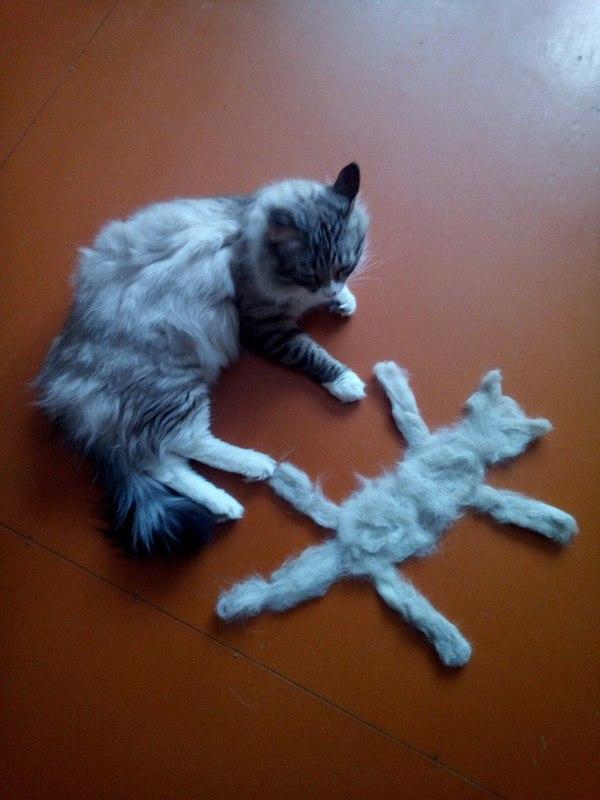 Кажется у меня появился второй кот кот, шерсть, Линька