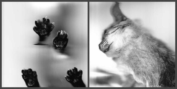 Немного напечатанных котэ вам кот, ксерокс, лапы, стекло