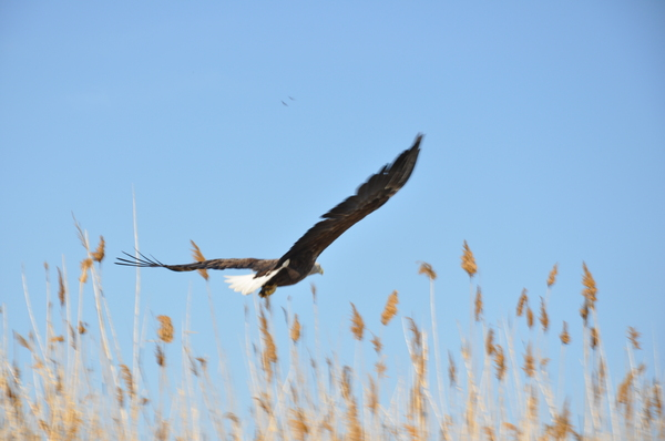 Фото с рыбалки в Астраханской области. Рыбалка, Птицы, Фотография, Природа, Астраханская область, Длиннопост