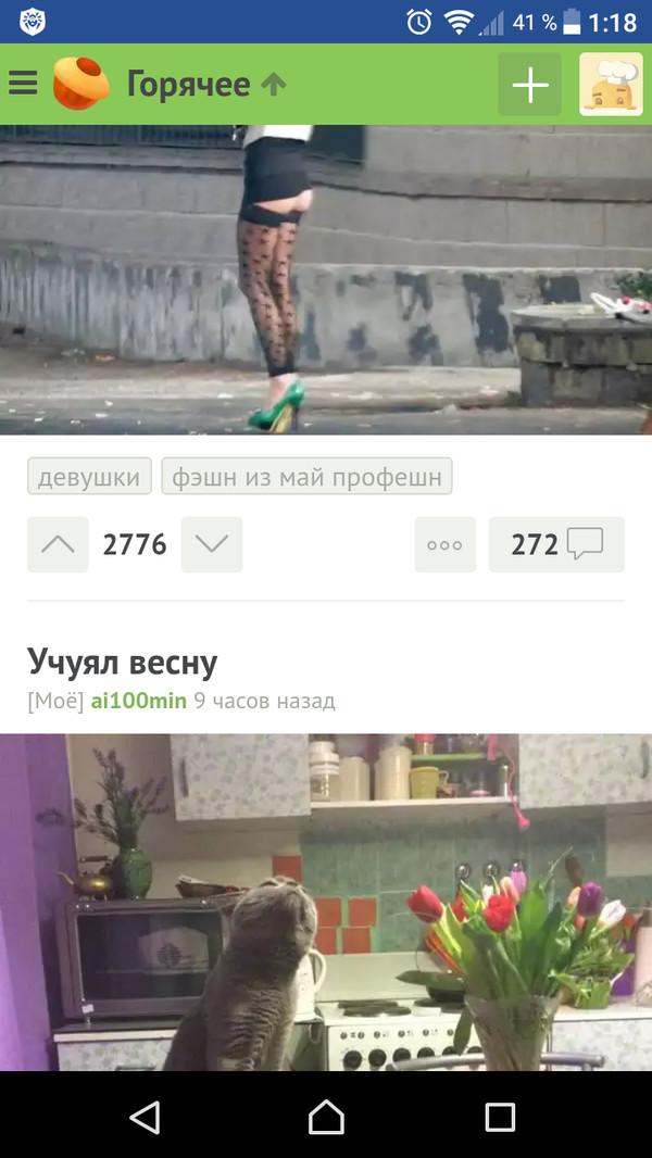 Отлично совпало))) Кот, Совпадение