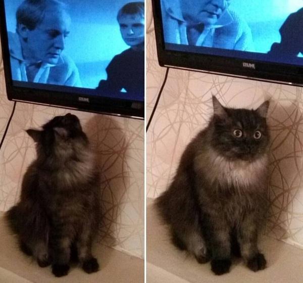 Влияние Российских сериалов на котиков.