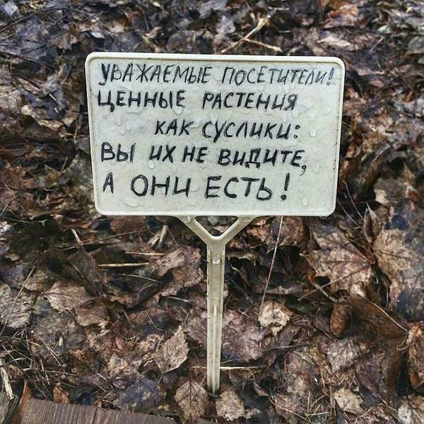 Табличка в Аптекарском огороде) ВКонтакте, Фотография, Суслик