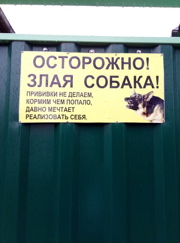 Собака, пока еще себя не реализовака