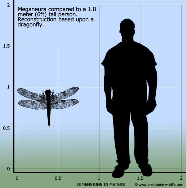 Мужчины – экспериментальный вид человечества? Мужчины и женщины, Сохранение вида, Копипаста, Длиннопост, Хромосомы