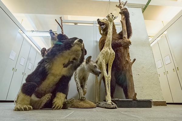 Мёртвая форма жизни. Что таится взакрытых хранилищах естественно-научного музея КШ, Кот Шредингера, репортаж, длиннопост, таксидермия, зоология, Дарвиновский музей, животные