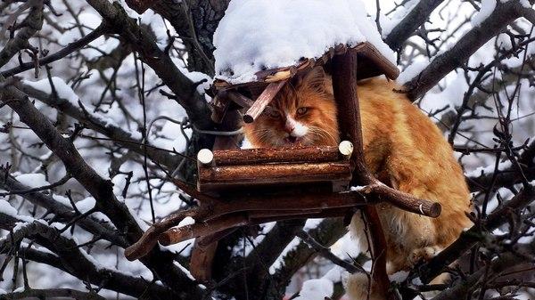 Талантливый человек талантлив во всем фотография, Брянск, Люди, красота России, длиннопост