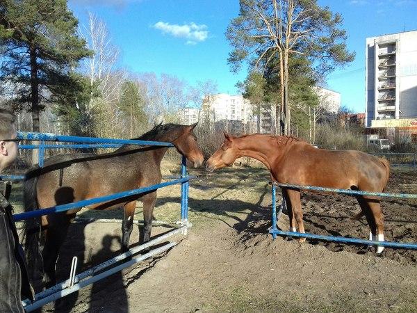 Лошадки и любовь Лошади, Любовь, Фотография, Тип в очках