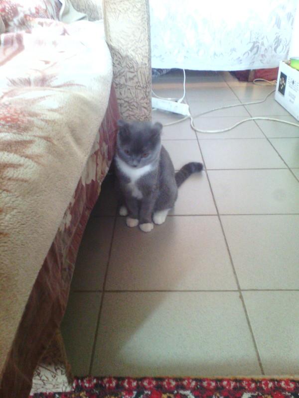 Кровавое утро кот, редиска