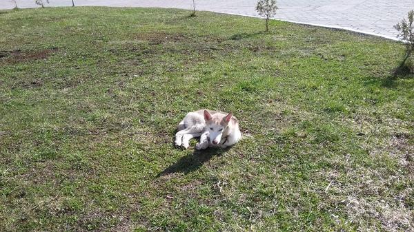Найдена собака Тула. Тула, Найдена собака