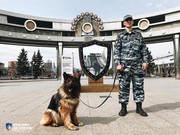 Тюменской овчарке Киме вручили премию «Спасибо за службу» Собака, Награда, Преступление, Полиция, Длиннопост
