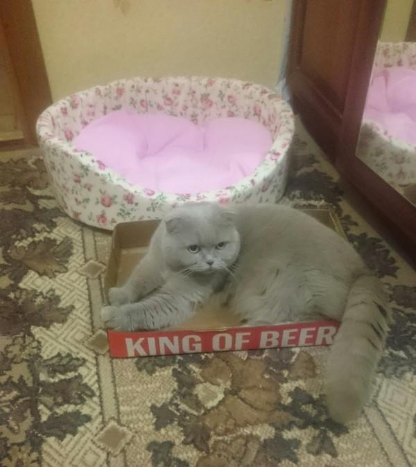 Пивной король Моясранаякошка, Король пива, Удобство, Фото на тапок, Кот