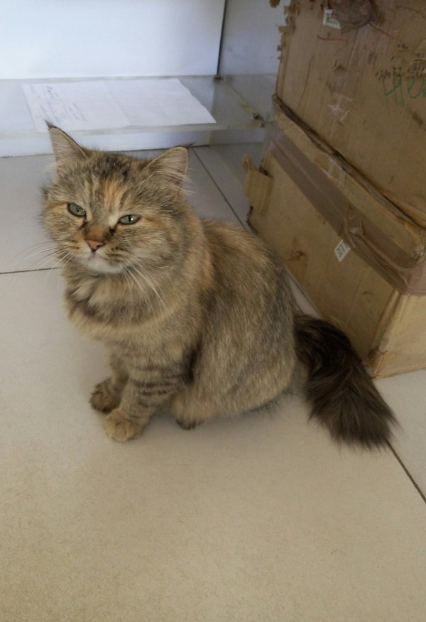 Просто котейка с одной из типографий кот, Оффисный котейка, типография