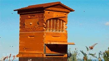 Мёд с одного улья