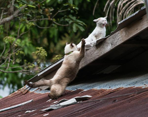 Котское кунфу. кот, котомафия