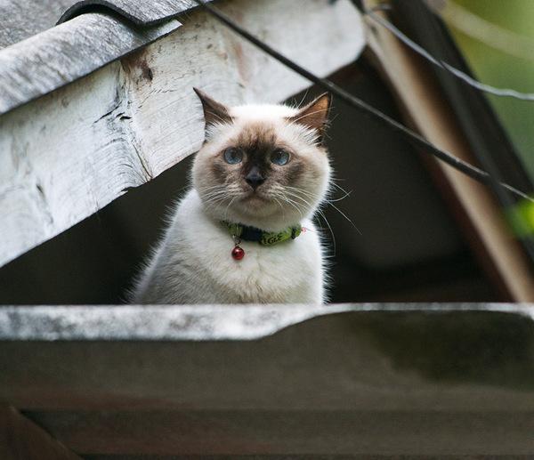 Котское кун-фу - 2. кот, котомафия