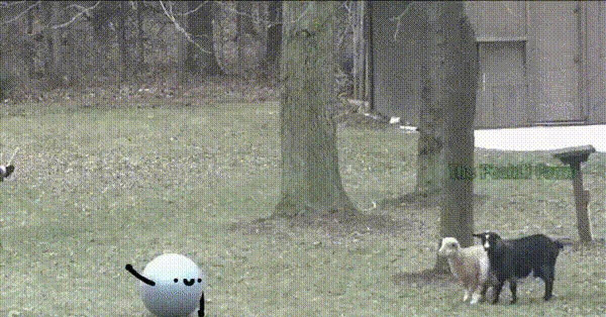 Обморочные козы гифка
