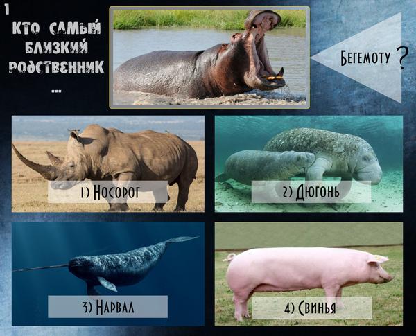 """Небольшой тест """"Загадки систематики"""" Тест, Систематика, Животные, Динозавры, Биология, Палеонтология, Эволюция, Длиннопост"""