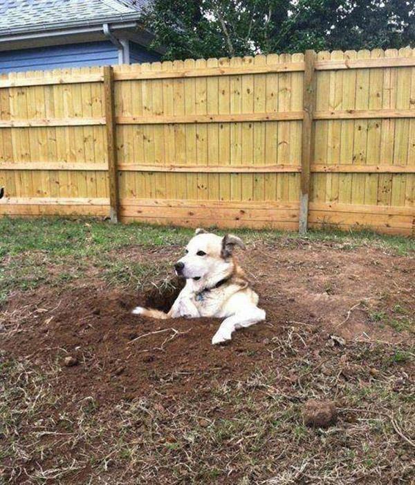 Твою мааать, и куда же я тогда закопал косточку?