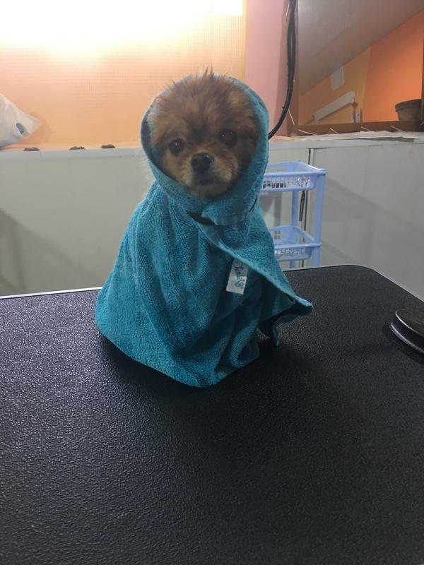 Хобби Собака, Груминг, Фотография, Текст, Моё, Длиннопост