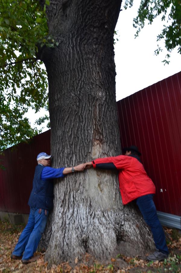 Самые большие дубы Алматы Алматы, дубы, возраст, вопрос, длиннопост