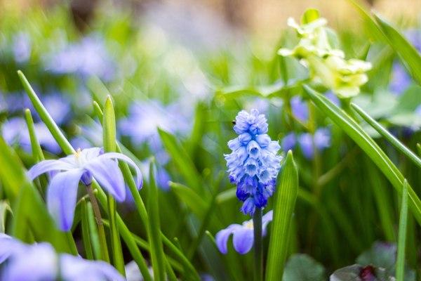 Весна наконец-то пришла! Весна, Фотография, Макро, Мануальная оптика, Длиннопост