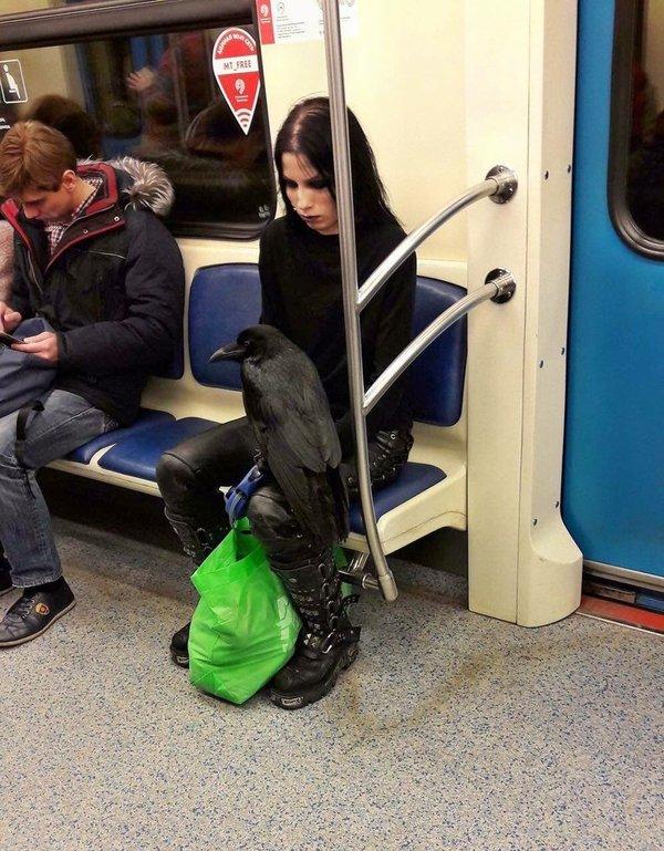 Всего лишь гот с вороном в метро не мое, twitter, готы, ворон, птицы
